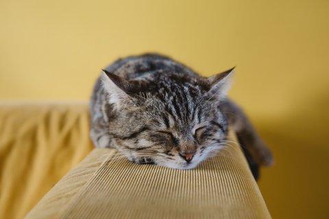 Sovende Katt Unsplash Sabri Tuzcu